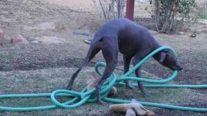 tangled hose